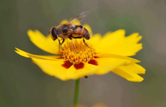 像那小蜜蜂一样在一朵花中休息