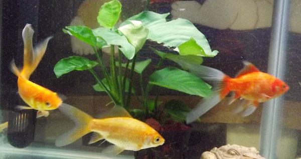 最近新发现的养鱼心得