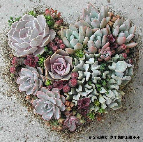 爱情花园情侣博客优化版 V6.38发布