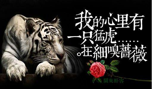 我的心里有一只猛虎在细嗅蔷薇